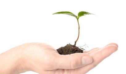 arbre environnement écologie nature sauver planète terre
