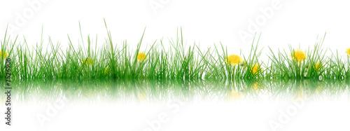 Fotobehang Paardebloem Gras