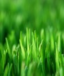 roleta: green grass