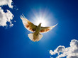roleta: Dove flying