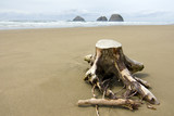 Tree Stump in the Sand poster