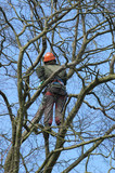 brave climber inspecting for tree damage poster