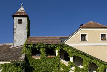 Fassade mit Efeu bewachsen in Weissenkirchen
