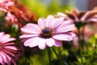 roleta: Blume