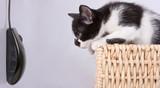 chat souris opposé chasse affût attraper commerce jeu piège poster