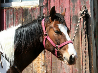 Brown horse tied to a barn