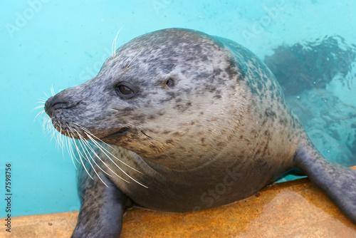 poster of Grey Seal Pup