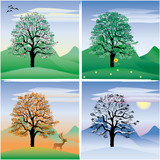 tree through the four seasons