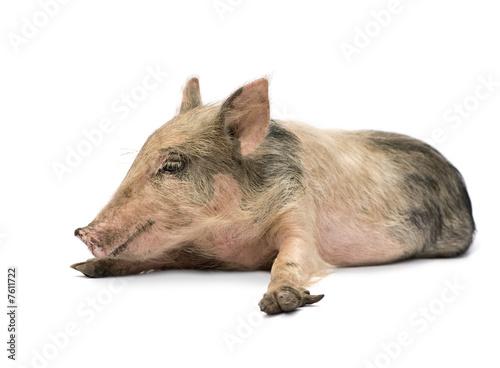Pigglet Poster