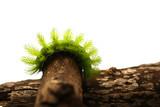 Scary Green Caterpillar poster