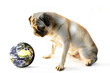 pug and earth