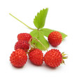 Sweet wild strawberries isolated on white background