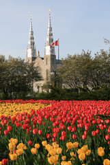 Notre-Dame Cathedral Basilica and Tulips