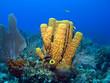 Leinwanddruck Bild - Yellow Tube Sponge