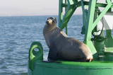 Seal on floating structure in ocean