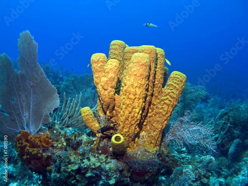 Leinwanddruck Bild Yellow Tube Sponge