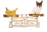 dog and banana