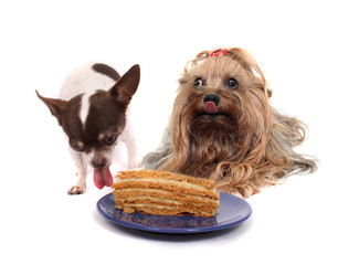 two dogs and the cake