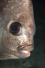 Bronze fish-face