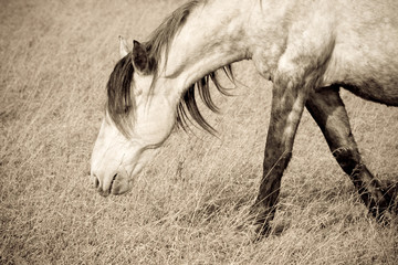 old horse