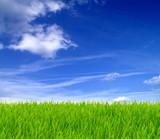 Fototapety Grüne Wiese und blauer Himmel 10