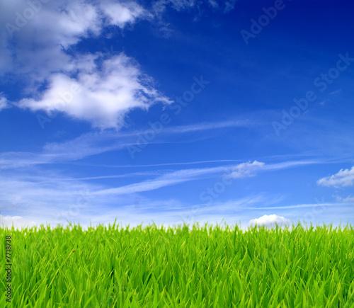 Grüne Wiese und blauer Himmel 10