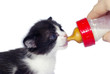 Скачать книгу Коты и кошки - качественный стоковый клипарт.