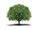 Fototapety Baum 7