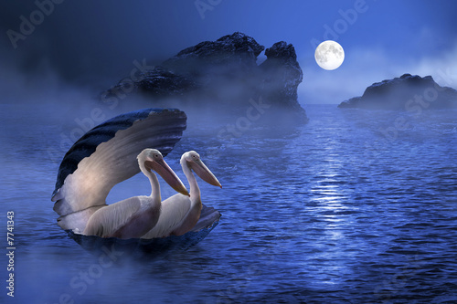 Fototapeta muszla - księżyc - Ptak