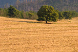 Rural landscape, South Africa poster