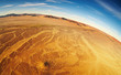 Namib Desert, bird