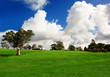 Rural Green Meadow