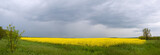 vivid panorama of yellow field with spring storm poster