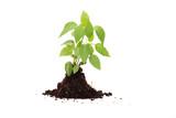 Fresh green plant for better environment poster