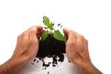 Green plant for better environment poster