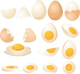 Eggs illustration