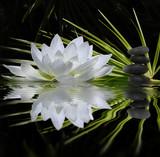 parfum de zen