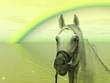 Cavallo e arcobaleno
