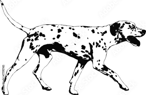 illustration of a dalmatian dog