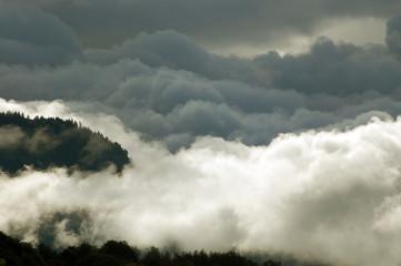 Wolkenwald1
