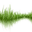 obraz - Grass