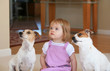 Little Girl With Two Jack Russell Terriors