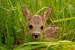 Leinwanddruck Bild - Bambi