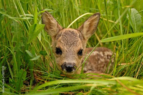 Aluminium Ree Bambi