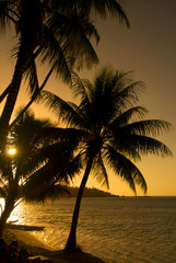 Coconut trees on moorea in south seas at sunset