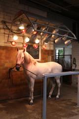 Pferd - Solarium