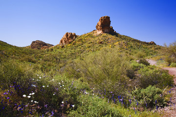 Arizona High Desert Springtime
