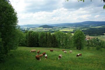 Saftige Wiesen und Felder im Bayerischen Wald
