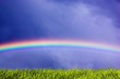 Fresh grass and sky with rainbow