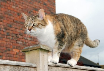 Grumpy cat on fence